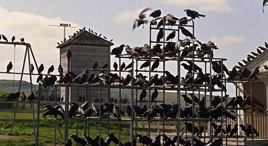 Playground Birds