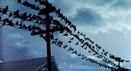 Powerline Birds