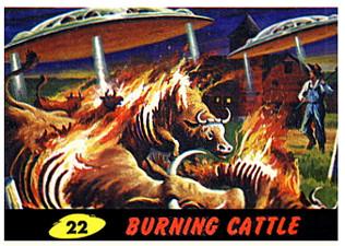 Burning Cattle #22