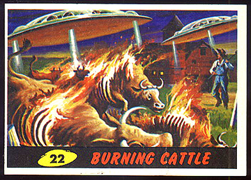 Burning Cattle #22